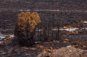 Bushfire damage in Tasmania, Australia, January/February 2016.