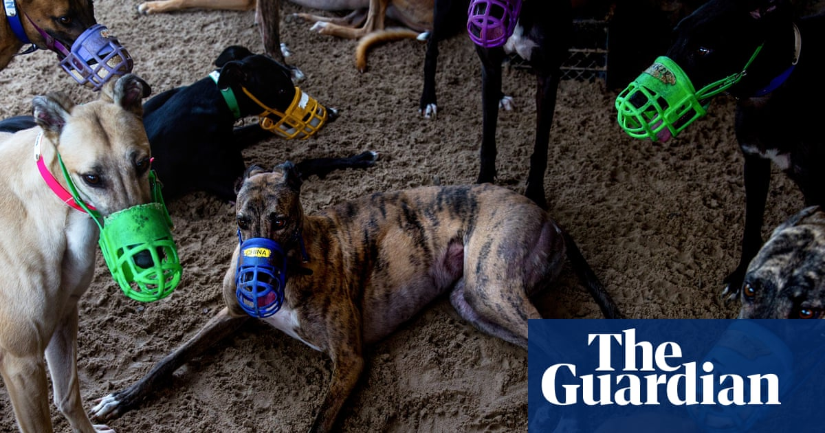 Race to find homes for greyhounds as pandemic closes Florida tracks