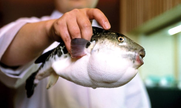 Fugu is one of Japan's most expensive winter delicacies, but it contains a poison that can be fatal.