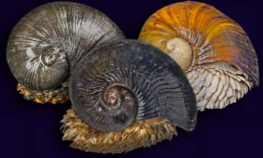 The scaly foot snail, one of the new additions to the red list