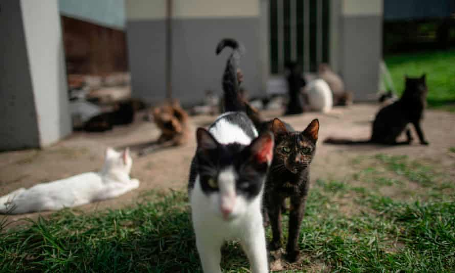 some cats in a sanctuary