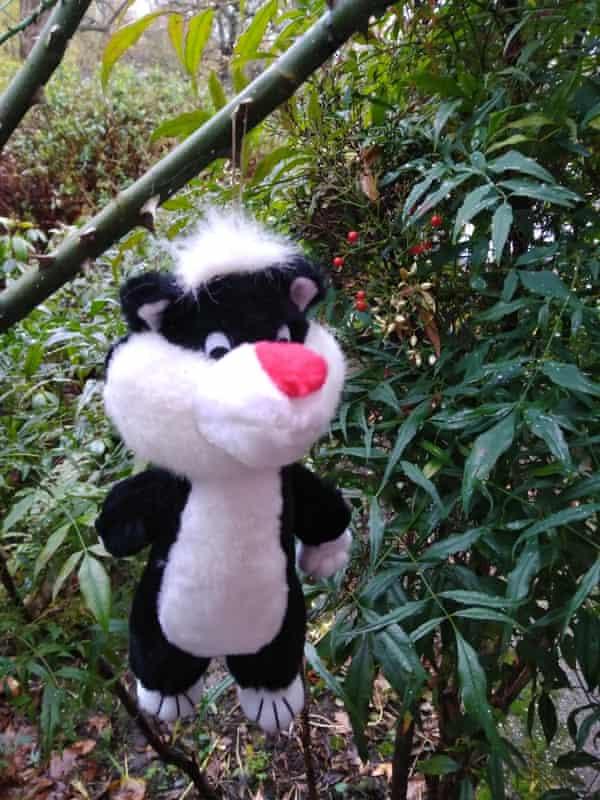 Manky cat: the Muir family Christmas heirloom