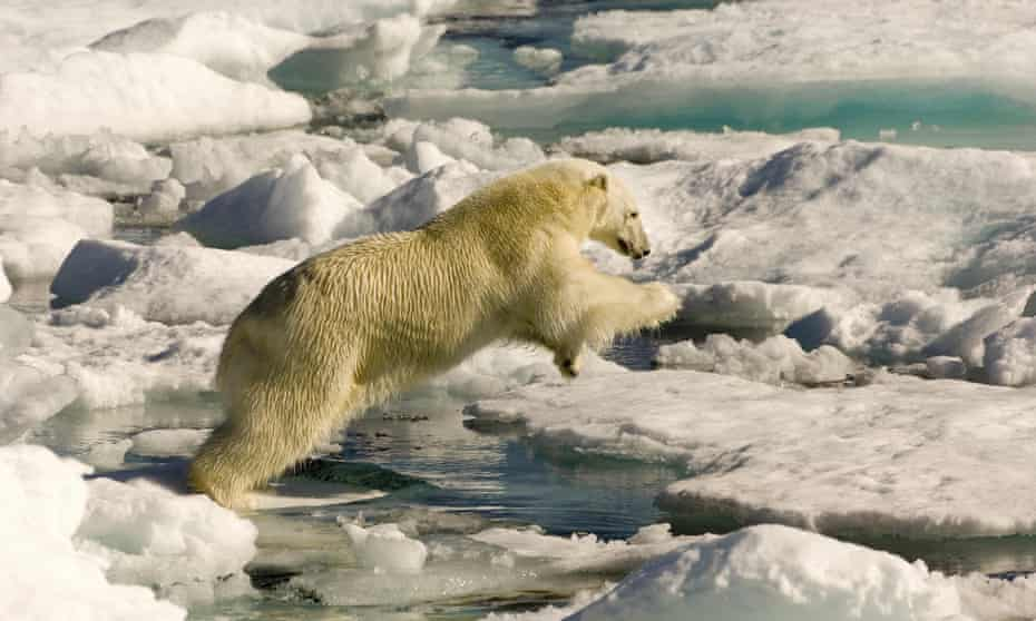 In Inuit culture, a polar bear remains a deeply respected animal, called Nanuk in the Inuktitut language, and getting one is considered the mark of a great hunter.