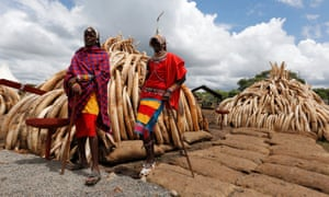 Maasai tribesmen pose for a photograph near mounds of tusks