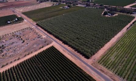 Almond fields near Mildura