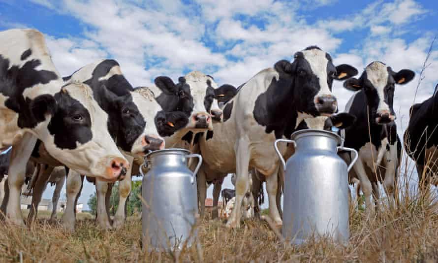 Good moos… is free-range milk the future?