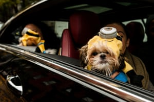 Dogs dressed as Minions arrive in style