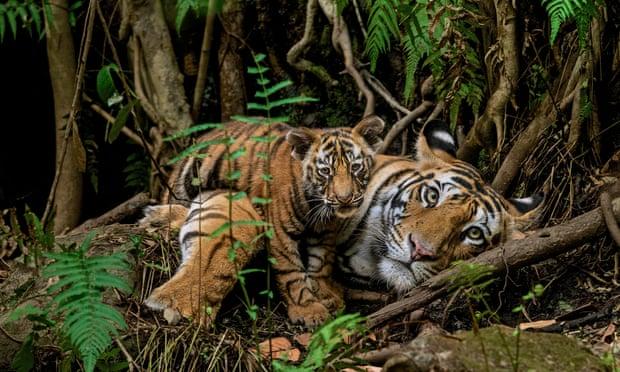 Photographers rewrite list of 'big five' animals to shoot