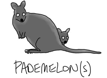 Pademelons
