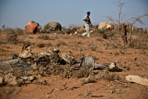 Dead goats and sheep rot in the scorching heat as a Somali policer patrols makeshift houses, near the town of Burao, in the self-declared state of Somaliland, 8 March