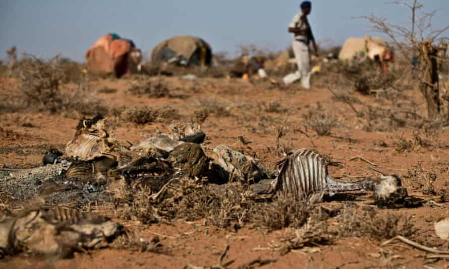Dead goats and sheep in front of makeshift houses being patrolled by a Somali police officer near the town of Burao.