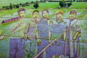 Shenyang, China. An image of youths, created by growing different varieties of rice, is displayed in a paddy in China's northeastern Liaoning province