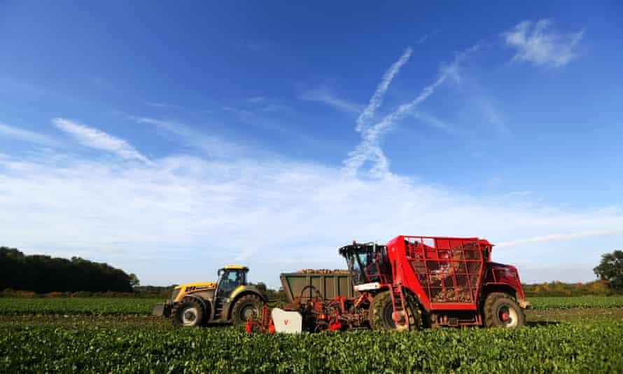 A beet harvester moves through a field of sugar beet near Diss.