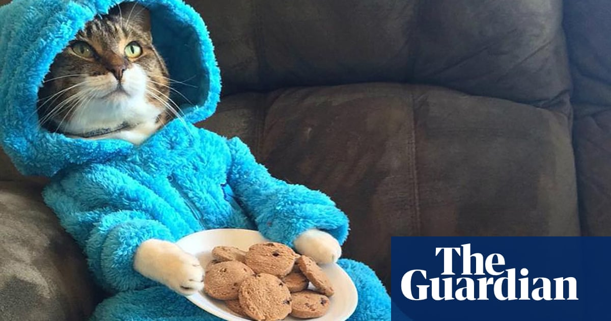 US embassy apologises after mistakenly sending Cookie Monster cat invitation