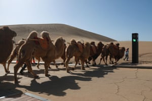 Dunhuang, China. A traffic light for camels and their farmers is used at the Mingsha Mountain and Crescent Spring scenic spot