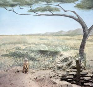 Meerkat and scenery