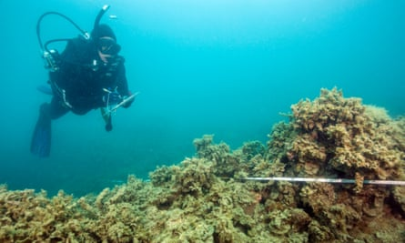 Repeated disturbances from climate change and deteriorating water quality have changed some reefs from coral to algae.