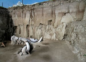 The bones of at least 14 mammoths, who would have lived more than 14,000 years ago, have been found in what is believed to be the first find of a mammoth trap set by humans.