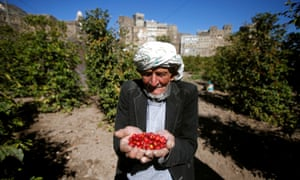 A farmer with a handful of freshly picked coffee cherries in Haraz, Yemen.