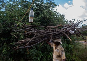 A farmer carrying firewood on her head passes through a barricade of hanged containers of the concoction used to repel elephants in Syaluwindi Village in Dete, Hwange, Zimbabwe