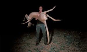 Professional kangaroo shooter Dwayne John from Broken Hill holds a dead red kangaroo in South Australia