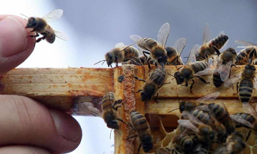 Bees fertilise 75% of all food crops, but there has been a worrying decline in their numbers in recent years.