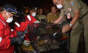 Officials tip rats into steel drums where they will be killed, during a pilot scheme in Cakung, East Jakarta, last week.