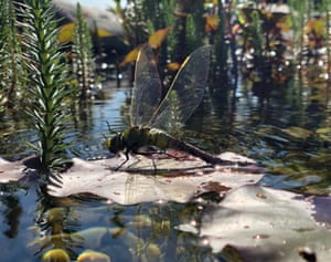 Young Photographer of the Year shortlisted: Silent noon, by Rosie Tarboton in Claygate, Surrey, UK Changes occur all the time in nature. It is a part of every organism's life cycle. This is very clearly seen in creatures such as dragonflies, which undergo metamorphosis