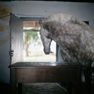 "Alessandra Sanguinetti: Buenos Aires, Argentina, 2001Buy the print Alessandra Sanguinetti writes: 'I came across a man who lived with his horse. It would come and go as it pleased, so sometimes he'd put sugar on the table to lure it back in for the night. I've been drawn to photographing animals, especially farm animals, since I was a kid, and always I'd be filled with a nostalgic, wistful feeling. I never understood the root of that feeling until I read John Berger's essay, Why Look at Animals? ""With their parallel lives, animals offer man a companionship ... different from any offered by human exchange. Different because it is a companionship offered to the loneliness of man as a species."""