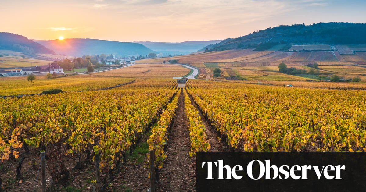 How to buy (relatively) affordable Burgundy wines