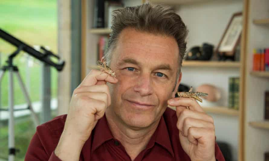 I don't like crickets ... Chris Packham (centre) with two locusts.