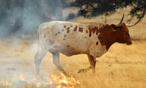 A burning pasture in California. The fire has been described as 'extremely fast-moving'.
