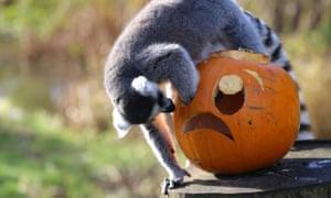 pumpkin zoo