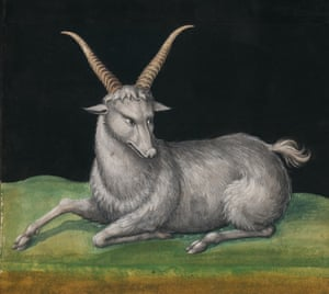 This drawing of a 'wild sheep' from Poland dates from the 1550s