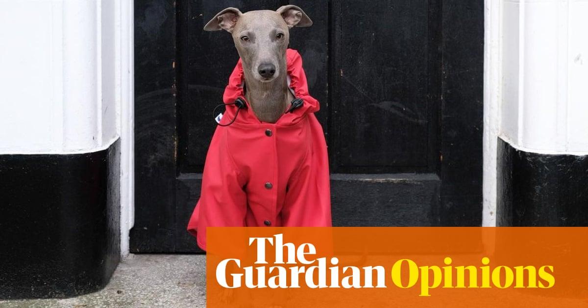 I've developed influencer envy – and the influencer is a dog
