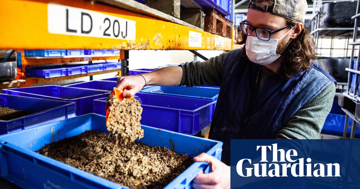 Bugs to the rescue: using insects as animal feed could cut deforestation – report