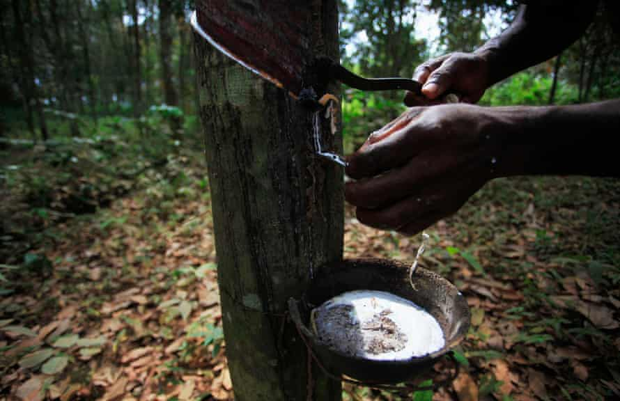 A worker taps a rubber tree in Songon, Ivory Coast