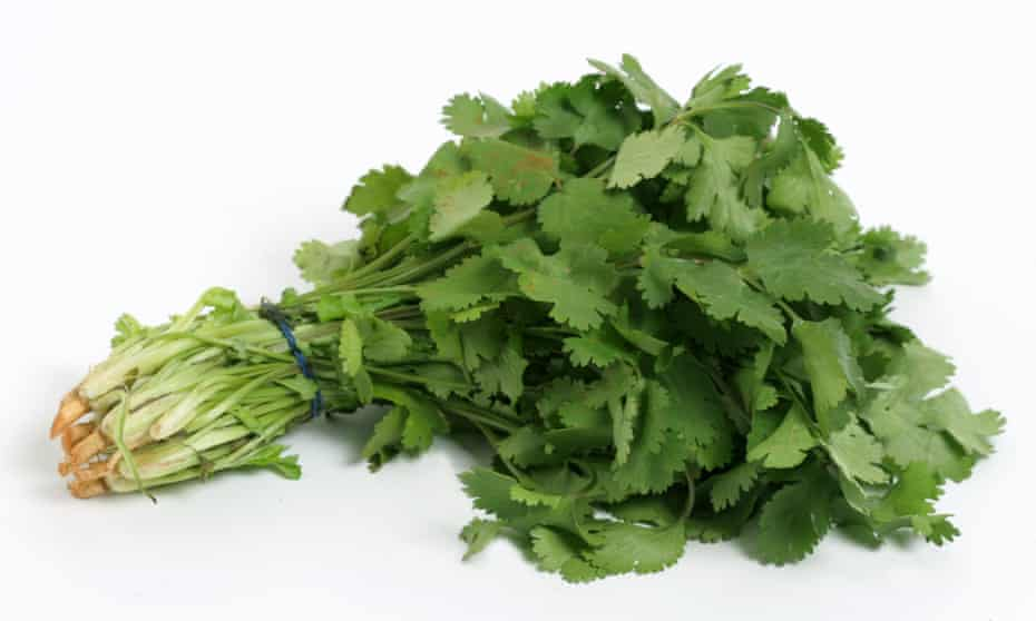 A bunch of coriander leaves
