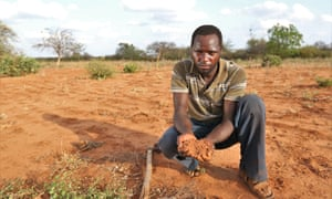 Are drought-resistant crops in Africa the tech fix they're
