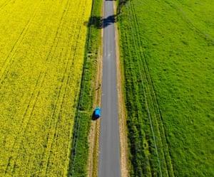 A road cuts through a field of Canola.