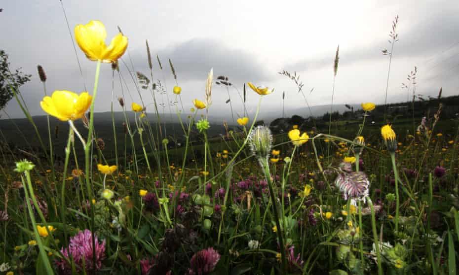 flower meadows in Upper Teesdale