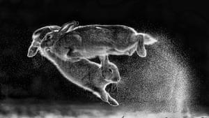 Jump by Csaba Darócz