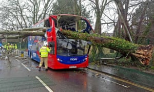 Emergency staff work on a bus which had a tree fall through its roof in Poole.