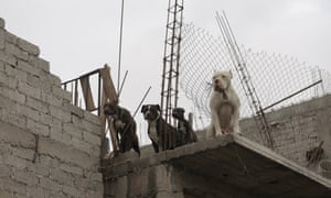 Neighbourhood dogs