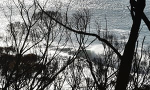 A breaking wave is seen through burnt trees in Separation Creek, Victoria, after the bushfires of December 2015.