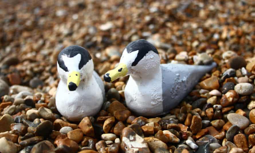 Wooden models of little terns are designed to guide the real birds away from busy beaches towards quieter areas to help breed.