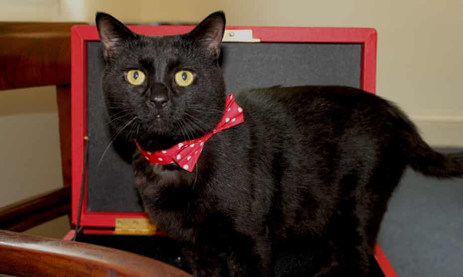 Gladstone, the Treasury cat, has more than 9,000 followers on Instagram.