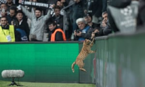 A cat jumps on to an advertisement board during Besiktas's Champions League game with Bayern Munich