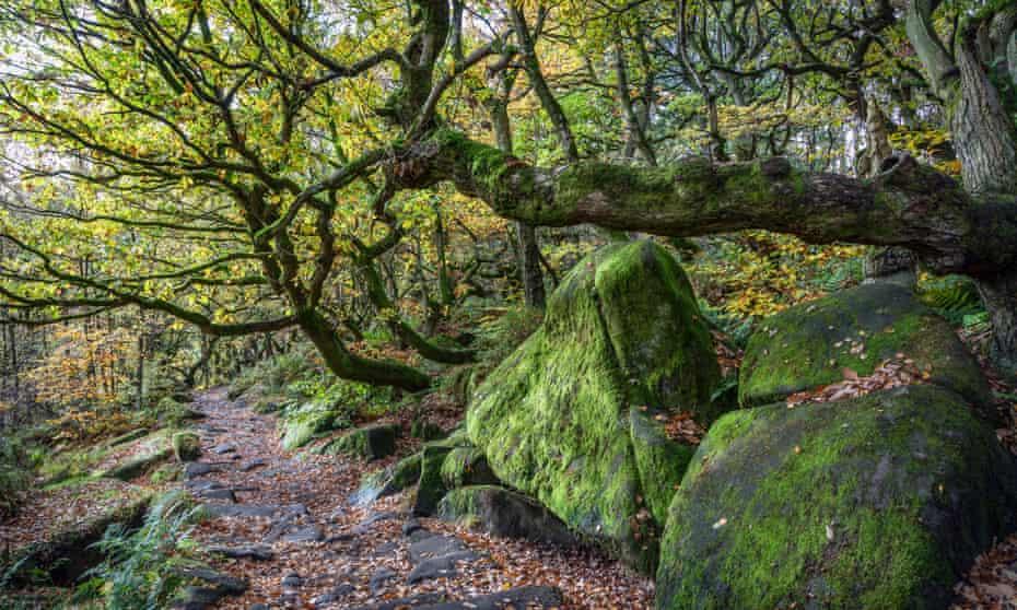 Autumn colours in Padley Gorge, Peak District National Park, Derbyshire2C391B0 Autumn colours in Padley Gorge, Peak District National Park, Derbyshire