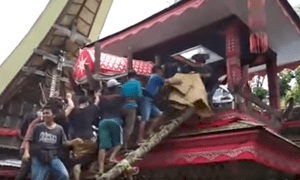 A funeral procession in Sulawesi, Indonesia. A man has died after his mother's coffin fell from a funeral tower and crushed him.